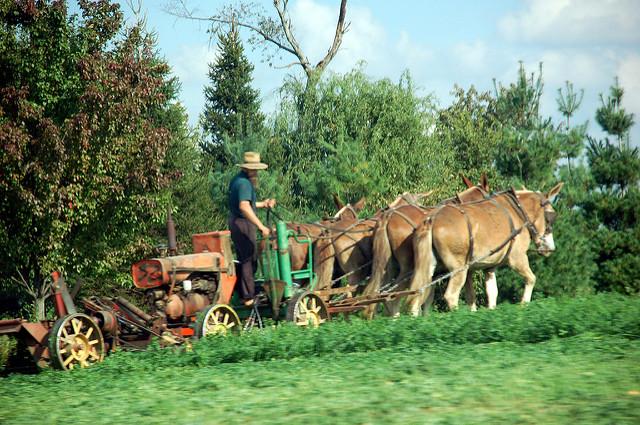 Photo of an Amish farmer